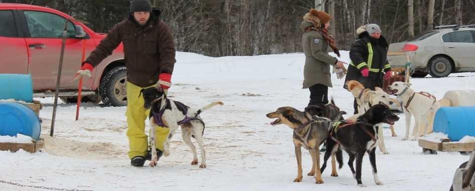 FORFAITS en traîneau à chiens