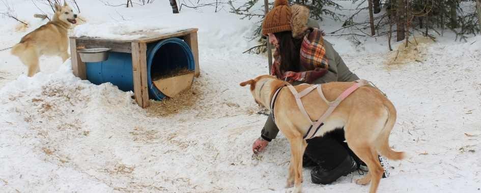 Activités hivernales Saguenay