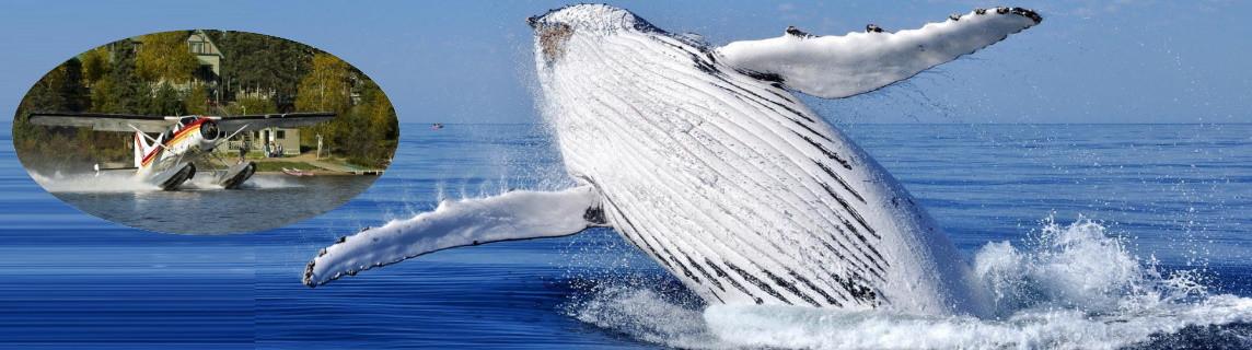 baleines-tadoussac