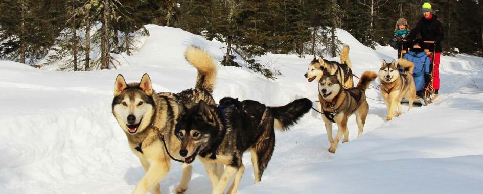 Le Chenil du Sportif vous propose des randonnées en traîneaux à chiens en pleine nature, où vous découvrirez la beauté du paysage de Charlevoix, tout en vous familiarisant à un mode de vie sain et naturel.  Vos hôtes Daniel et Karine vous aideront à rendre votre séjour agréable et à faire de cette aventure un souvenir inoubliable.