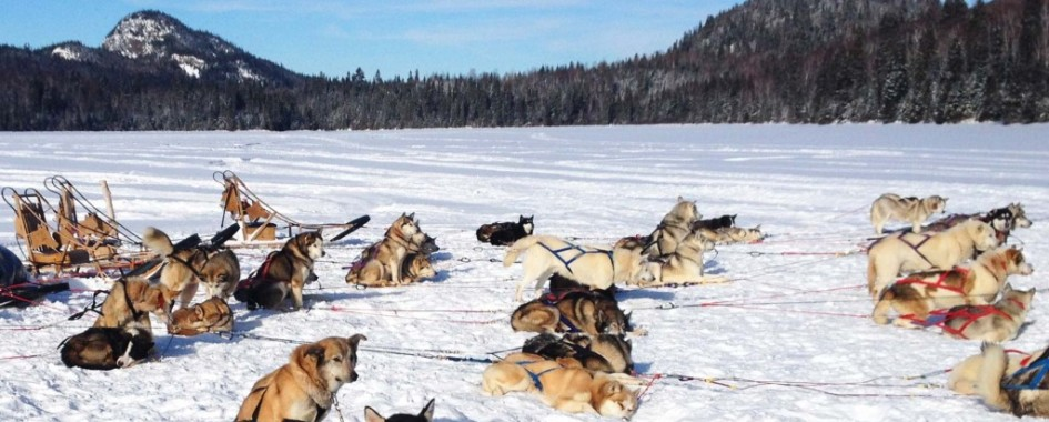 Forfaits traîneau à chiens Québec