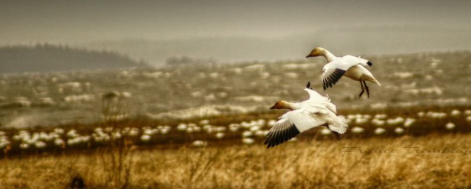 Réserve nationale de faune du cap Tourmente