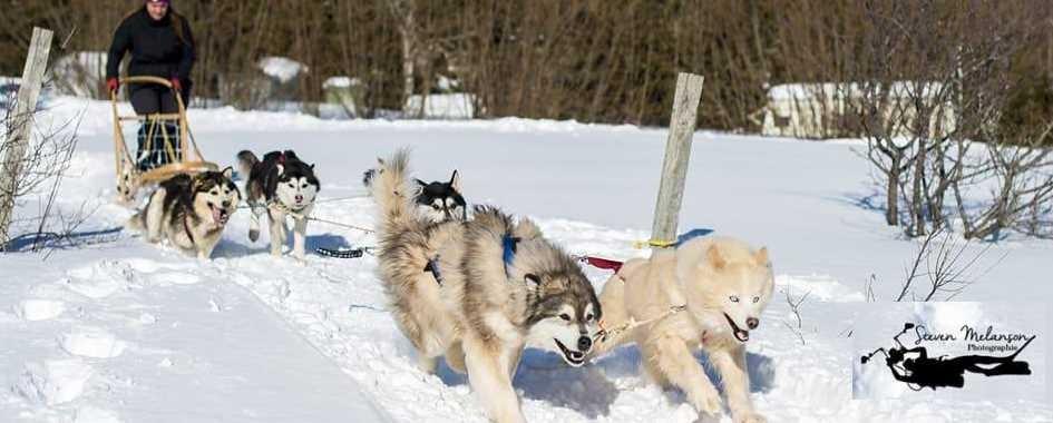 Traîneau à chiens Gaspésie