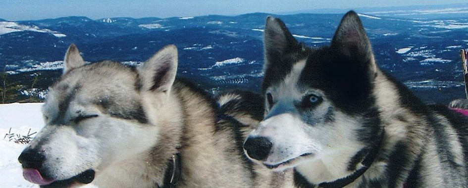Forfaits traîneau à chiens Charlevoix